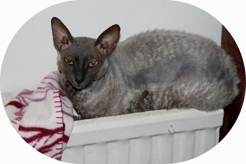 kissa-patterilla
