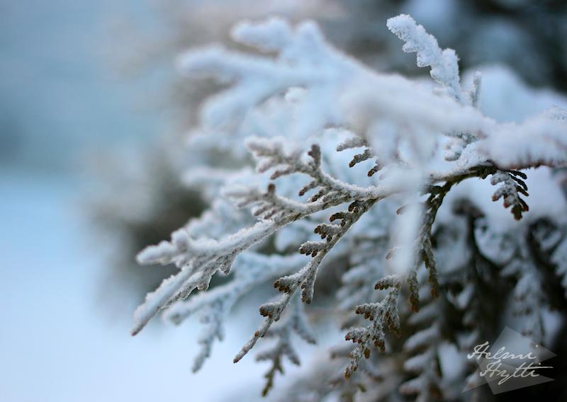 talvi-luminen-oksa