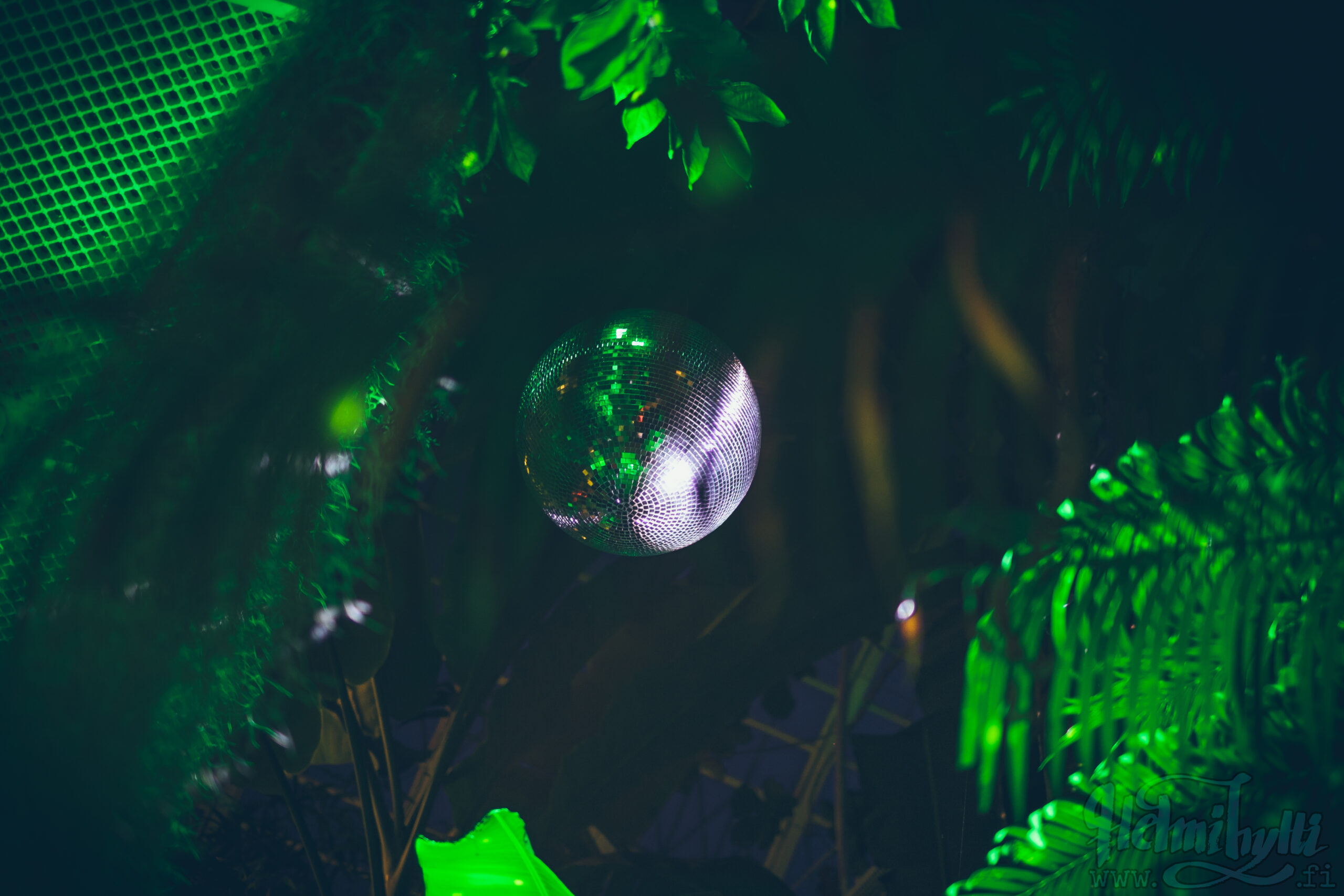 viidakko-bileet
