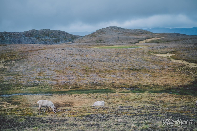 roadtrip-norja-nordkapp