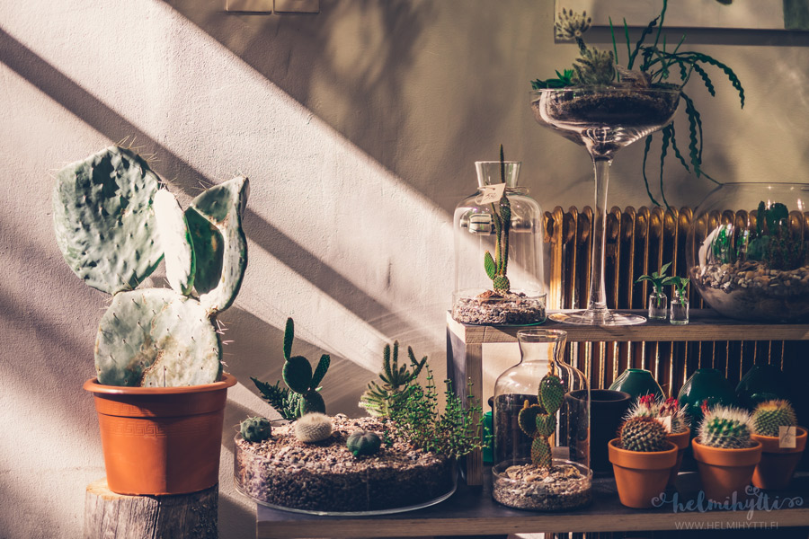 kaktuskauppa-tampere