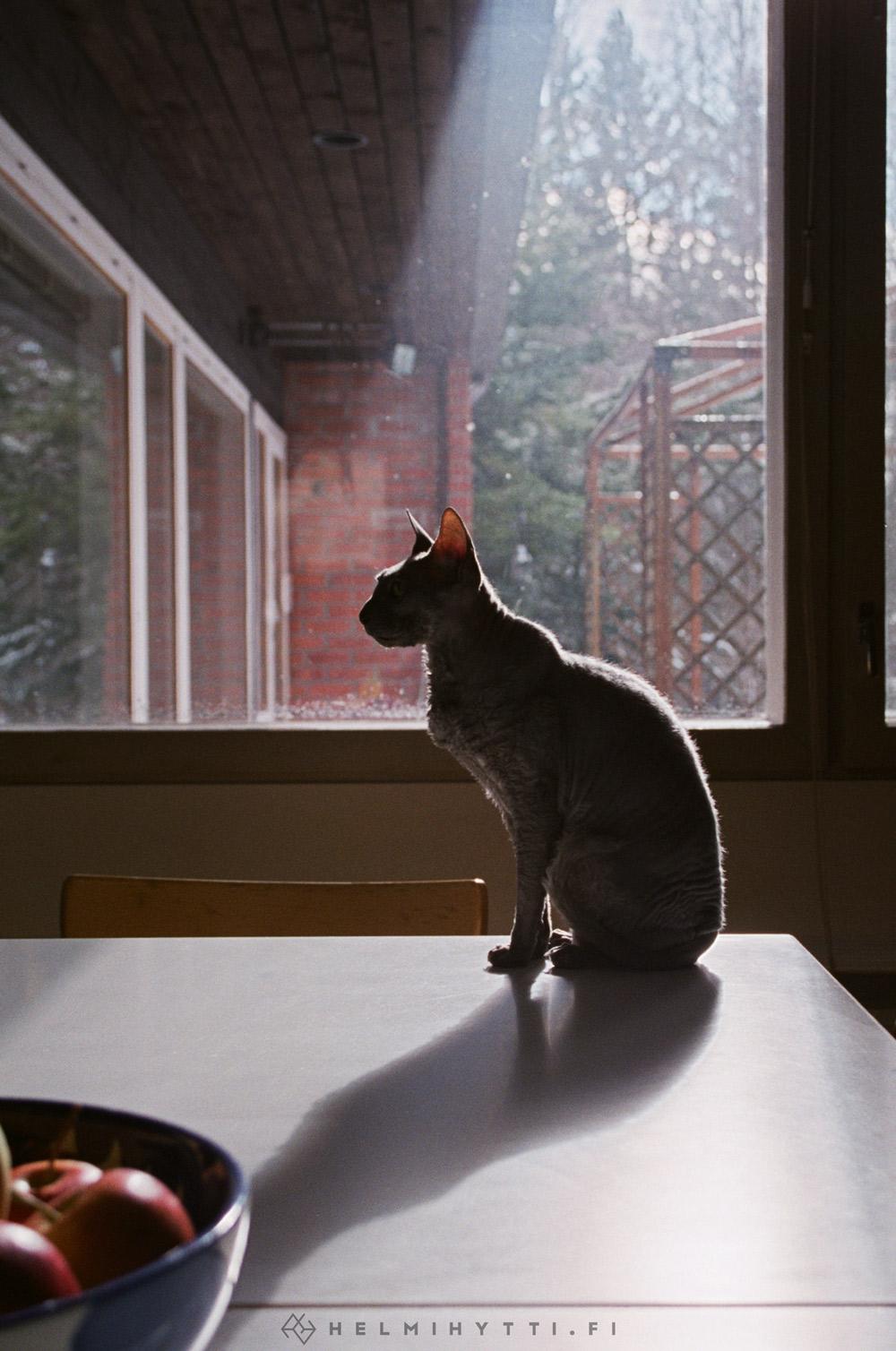 filmikuva-kissa